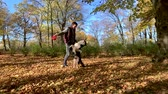 sheepdog : Slow motion - Man training a happy dog in the autumn park. Beautiful Australian shepherd puppy 10 months old - jumping, enjoy playing in a park an autumn sunny day. High speed camera - shot at 240fps.