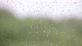 Rain days. Close-up of water droplets on glass of window. Raindrops on window surface with green background. Filmati Stock