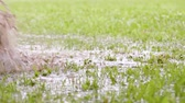 facilidad : Close-up slow motion shot of barefoot man jumps in grass while water sprinkles. People in muddy puddle. Male legs walking on wet green grass. Freedom and happiness concept. Archivo de Video