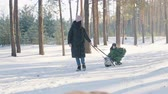 puxar : A woman carries a Christmas tree on a sled with her son .Christmas tree on a sled. Vídeos