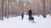 мать : A woman carries a Christmas tree on a sled with her son .Christmas tree on a sled. Стоковые видеозаписи