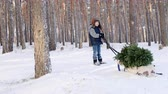 санки : A little boy is carrying a Christmas tree on a sled. Goes through the snow-covered forest . Soon Christmas concept Стоковые видеозаписи