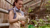 botanikus : Woman gardener is caring about seedlings in small pots with love in greenhouse. Stock mozgókép