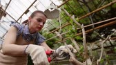 farmers market : Woman gardener with pruning shears in hand caring tree. Gardening in greenhouse.