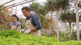 botanikus : Two professional gardeners are caring for sprouts and seedlings in greenhouse, hands close-up.