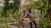 agribusiness : Woman gardener with pruning shears in hand caring tree. Gardening in greenhouse.