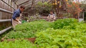 arrosoir : Workers in greenhouse, woman agronomist with tablet inspected seedlings, man gardener is watering plants. Vidéos Libres De Droits
