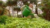 Man gardener is working in the garden, watering green seedlings with watering can.