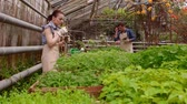 agronomia : Workers in greenhouse, woman agronomist with tablet inspected seedlings, man gardener is watering plants. Stock Footage