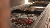 karakalem : Close view at a glowing charcoal and flame in the barbecue grill. Shallow depth of field. Stok Video