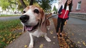 sahip : Girl walk about with beagle puppy in autumnal park