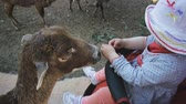 koets : Baby visiting the zoo. Baby girl in white hat sitting in a baby carriage touching the head of a goat in farmyard