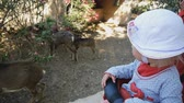 Baby visiting the zoo. Baby girl in white hat sitting in the pram looking at walking goats and sheep in farmyard