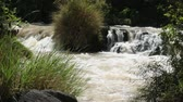 beauty in nature : The Awash River flowing through the dense vegetation in the Rift Valley area of Ethiopia Stock Footage