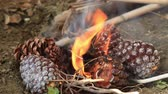 fogueira : Pine Cones Burning in a Fire Vídeos