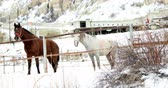 galope : Horses In The Snow