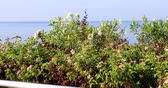 salon luxe : Scenic view of Mediterranean sea with tree and flowers Izmir Turkey