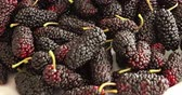 Black mulberries heap in dish