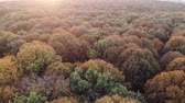 dusk forest : Aerial view of colorful autumn forest, oak woods, sunset Stock Footage