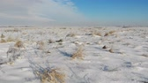 Snow-covered steppe with dry grass. Nature in winter, countryside. Fly forward over the land