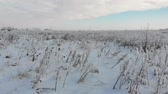 Snowy steppe with dry grass and weeds. Abandoned land, Ukraine