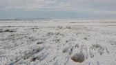 wintertime : Aerial view of snowy steppe, countryside landscape. Land overgrown with shrubs and weeds. Smooth fly forward