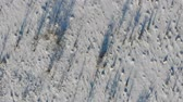 Land overgrown with shrubs and weeds, rural area. Snow-covered steppe. Aerial view with smooth fly up Vídeos