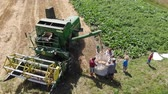broušení : Drohobych, Ukraine - 04 July, 2018: Aerial view of combine harvester winnowing wheat into big bag held by people. Harvesting, countryside. Slow motion