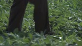 Farmer walking across field and checks out his crop - full hd footage 1080p Stock Footage