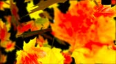 kasım : Falling Autumn Leaves. Abstract Loopable Background