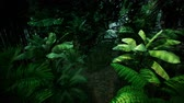 акация : Timelapse view over a beautiful lush green jungle. 4K