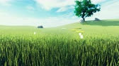 Beautiful video of morning green grass, tree in the background, flowers, morning sun and clouds on blue . Beautiful summer loop background.