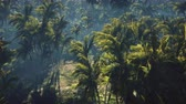 vojsko : Wrecked tank lies in the jungle in the middle of palm trees and tropical vegetation