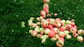 apfelbaum : Red apples are scattered across the grass from a wooden basket in slow motion.