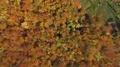 reforestation : Aerial, top view from Drone: view of the forest crowns of trees from above. Autumn period.