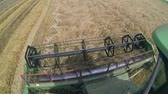 cabine : A combine harvester reaps wheat field, cabine view. HD1080p.GoProHERO3.