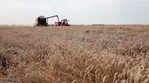 sky : Harvest combine and tractor  working in a wheat field.HD 1080p.Canon EOS 600D. Stock Footage