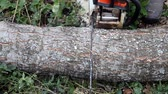 nature close up : Cutting the tree trunk Chainsaw