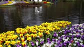 springtime : Keukenhof colorful blooming garden and Pond springtime