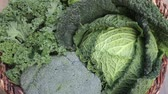 sorts : various green cabbages in basket rotating on daylight Seasonal Vegetables