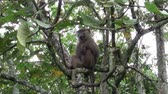 uganda : A Wild Baboon Sitting on the Branch of a Tall Tree with Leaves and Foliage in Uganda, Africa