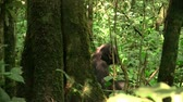 A Chimpanzee Sitting on the Ground in a Green Jungle Forest, Seen From Behind