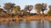 Намибия : Okavango River Bank with Trees, Bush and Water Passing By, African Landscape in Beautiful Evening Light with Trees and Bush