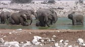 namibie : Elephant Herd Bathing, Playing and Squirting Water at Okaukuejo Waterhole, Etosha National Park, Namibia, Africa Stockvideo