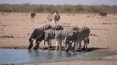 plaines : Zebras Drinking at Waterhole in Arid Plain of the Etosha Pan, Etosha National Park, Namibia, Africa