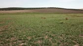 andaluzia : Field planted in spring, Jaen, Spain