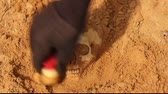skull : uncovering a human skull in the sand