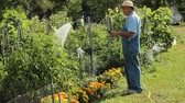 retired man watering his garden