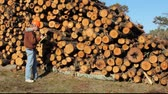man inspecting a stack of pine logs
