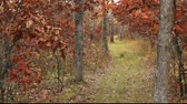 hiking trail in an autumn forest